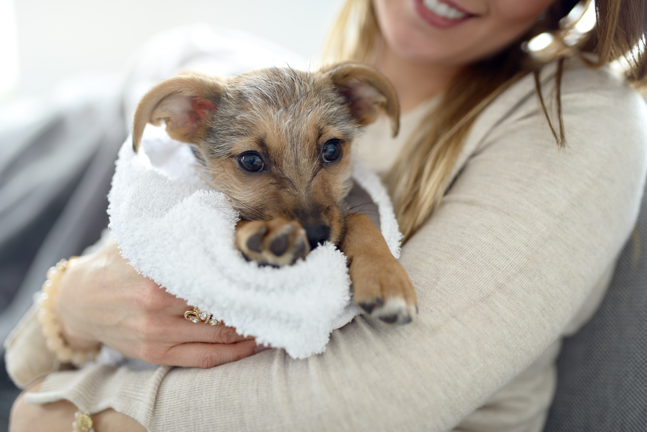 Little puppy wrapped in towel